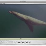 QuickTime Player App for PC Windows 10 Last Version
